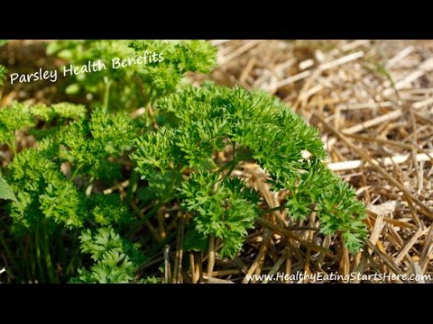 Parsley Health Benefits Can Parsley Beat Kale?