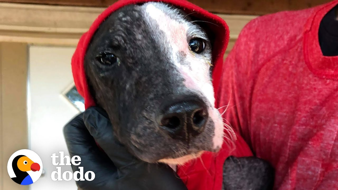 Puppy Found On Train Tracks Is About To Meet His Forever Family   The Dodo Foster Diaries