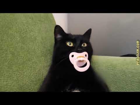 Приколы с кошками и котами