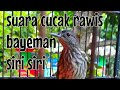 Suara Burung Cucak Rawis Bayeman Siri Siri  Mp3 - Mp4 Download