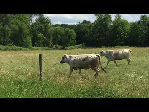 Manna Farms