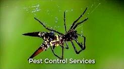 Pest Control Phoenix (602) 536-6337