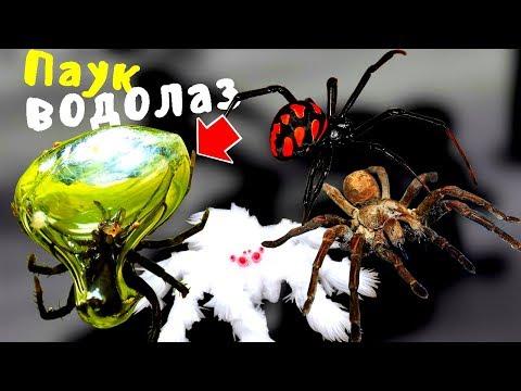 Самые ядовитые пауки в мире ТОП-10