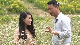 Buckwheat flowers bring a sparkle to Hanoi thumbnail