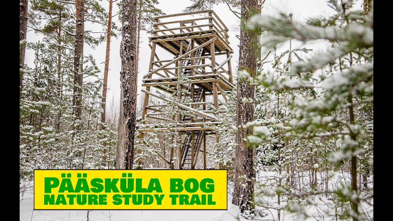 Pääsküla Bog Nature Study Trail / Pääsküla Raba Loodusõpperada - Estonian Nature