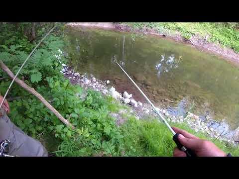 Brown Trout Hunting 08.06.2018 In Estonia