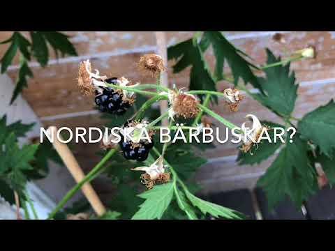 Odla På Balkong Vilka Växter Behöver Du Ta In? Snabbguide inför hösten