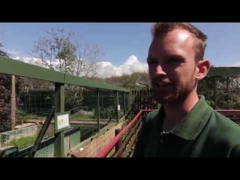 Borth Zoo Aberystwyth