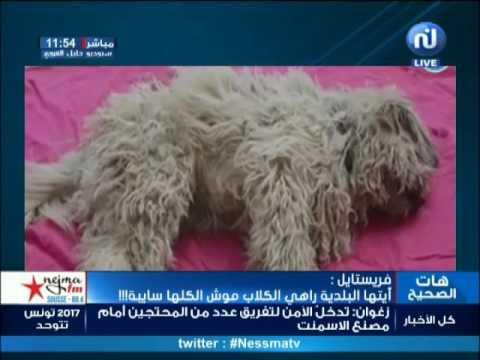 فريستايل: أيتها البلدية راهي الكلاب موش الكلها سايبة !!!