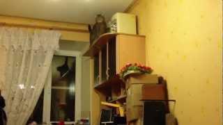 Кот-каскадер 2