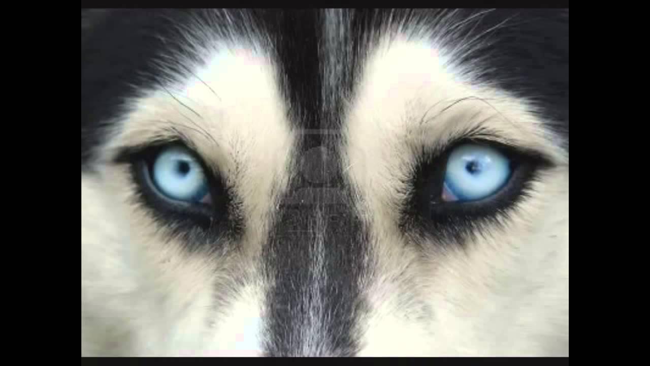 Ojos de Perro Azul Gabriel Garcia Marquez (Completo) - YouTube