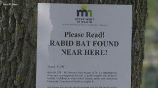 Rabid bat found at Lake Harriet