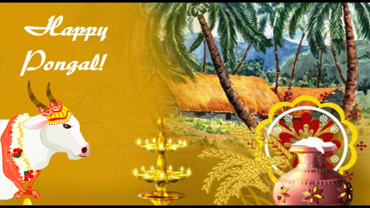 Happy Pongal 2018 Greetings Wishes Whatsapp Video E Card Free