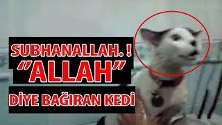 SübhanAllah ... !! Allah Diye Bağıran 10 Hayvan