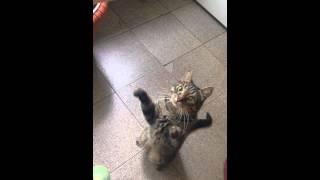 Кот Трузик просит кушать и машет лапками