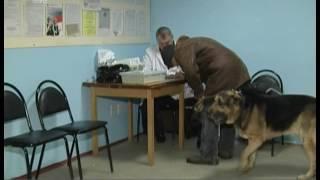 В Челябинске стартовала бесплатная вакцинация домашних животных. Где можно привить кошек и собак?