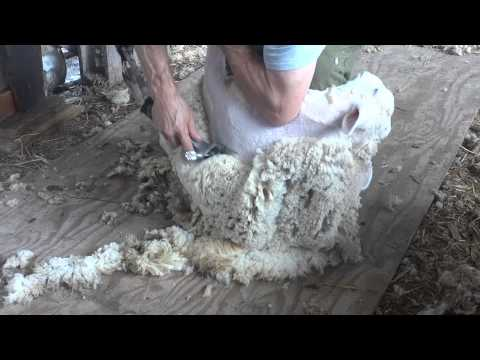 Machine Shearing Instruction