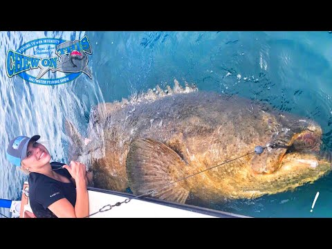 Operating Nurse Fishing For Monster Fish in Florida - Sharks and Goliath Grouper From Texas