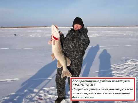 Активатор клева рыбы FishHungry