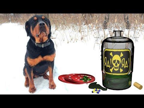 Вопрос: Как приучить собаку не жрать с земли, и не брать еду у чужака?