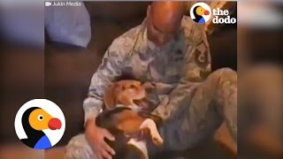 Dog Reunites with Soldier, Dog Cries in Joy | The Dodo