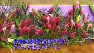 ロッテ歓迎会の会場が熱帯花卉で華やかに