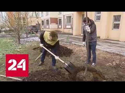 Можжевельник - Декоративные деревья и кустарники