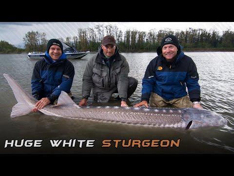 Wild Water Adventures  part 38. – Giants Under The Surface