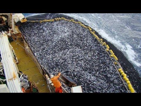 Рыбаки в Деле! Самые Большие Уловы в Мире