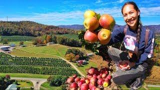 เก็บแอปเปิ้ลในสวนริมเขา U Pick apple, beautiful orchard (EN/TH sub) l Jayy Crane