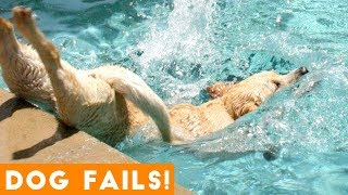 Golden Retriever Funny
