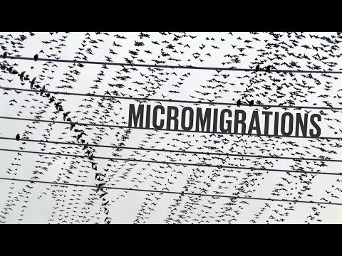 Revealing the Hidden Patterns of Birds and Insects in Motion