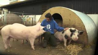 Lusso's Pig Tales