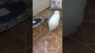 Прикол. Кролик любит кошку.