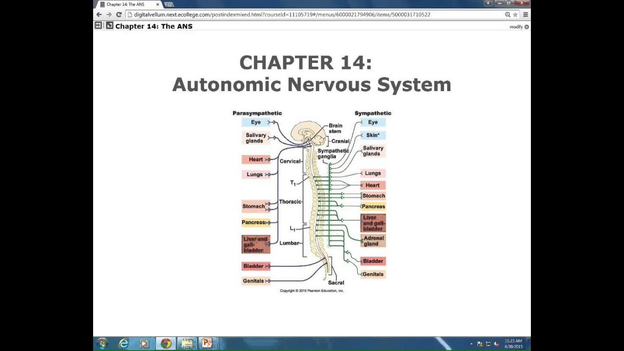 LECTURE: Autonomic Nervous System, Pt.I - YouTube