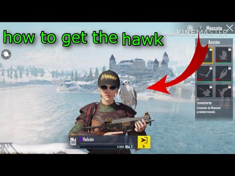 How To Get The Hawk Cómo Conseguir La Mascota El Halcón En Pubg Mobile Rápido Y Fácil Youtube