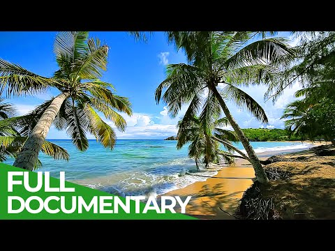 Martinique - French Pearl in the Caribbean | Free Documentary Nature