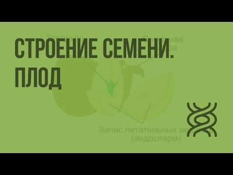 Ботаника - Учебник для 5-6 классов - Корчагина .
