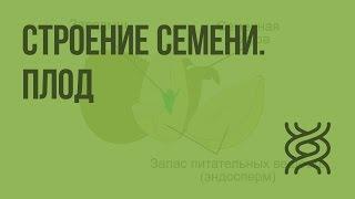 Строение семени. Плод. Видеоурок по биологии 6 класс
