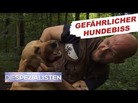 Hundebiss: Überträgt das Tier Tollwut?   Auf Streife - Die Spezialisten   SAT1. TV