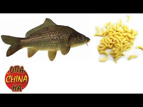 Приманка для рыбалки с Aliexpress червячки