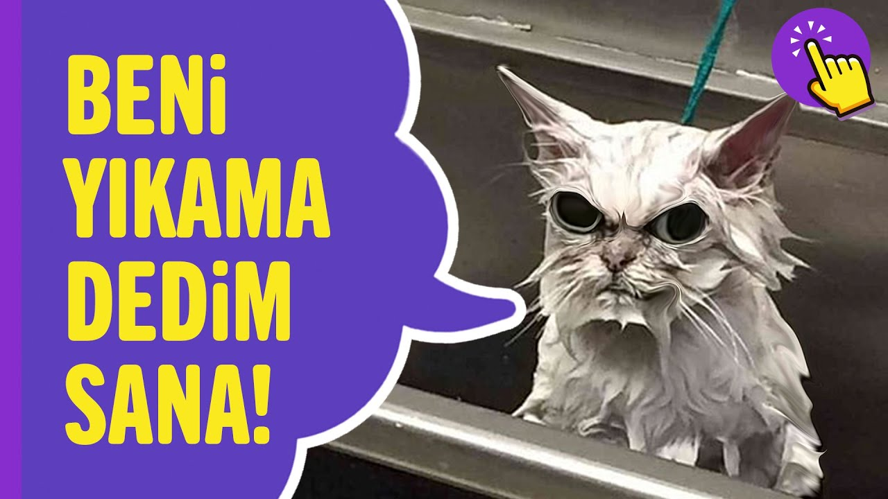 Kediler Hakkında 10 Yanlış Bilgi | Hayvanlar Alemi - Aklında Olsun