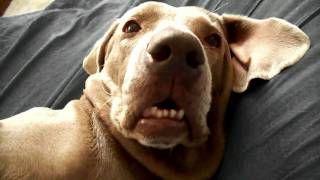 Snoring Dog Farts And Wakes Its Self Ha Ha Omg*