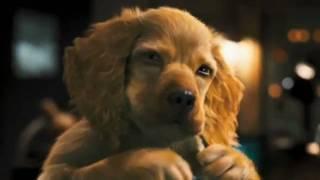 Como Cães e Gatos 2   Trailer Teaser dublado