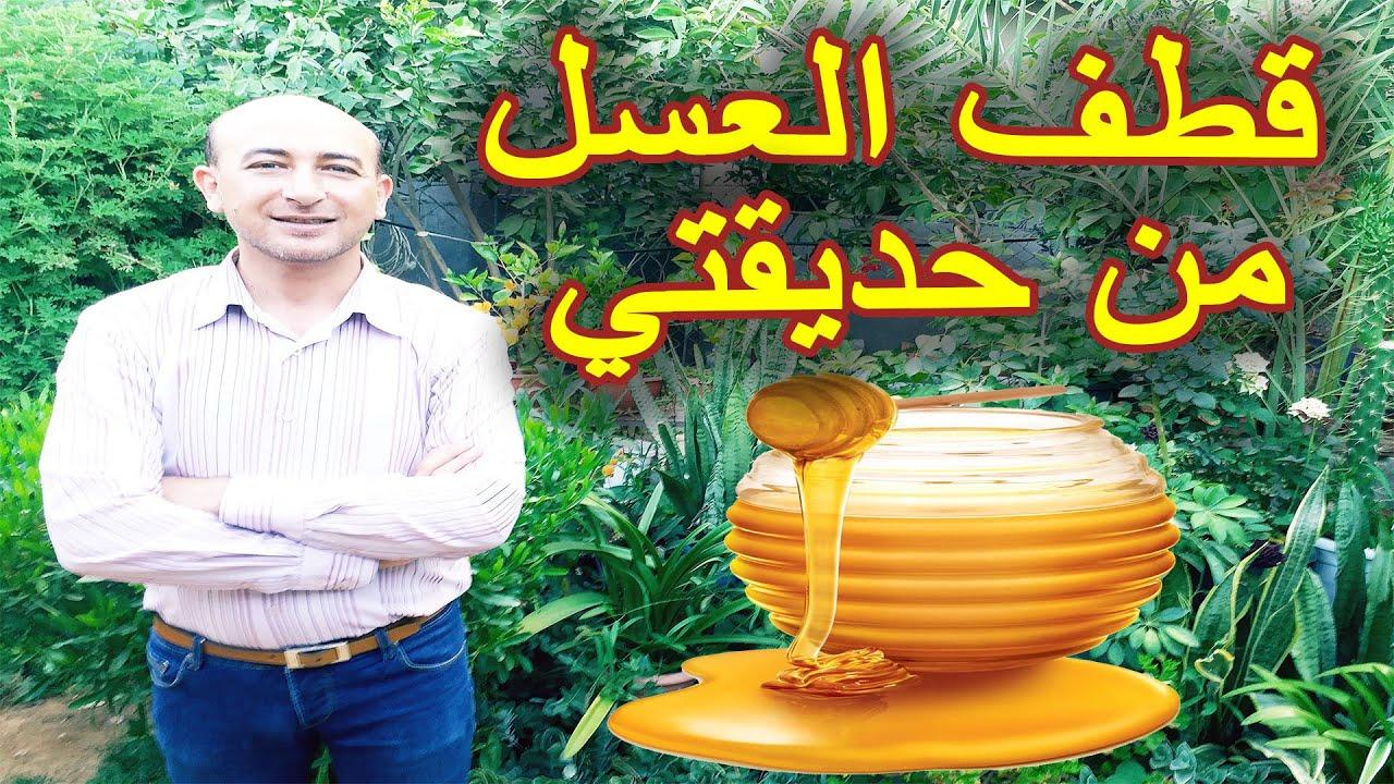 عملية قطف العسل, مراحل جني العسل, خطوات قطف العسل, قطف العسل من حديقتي, Harvesting Honey.