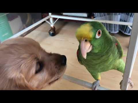Puppy Meets Parrot