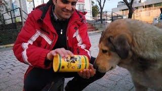 Sokak Köpeğini Mama ve Sevgiyle Besledik