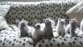 Танец котят Прикольное видео смешных котят-танцоров