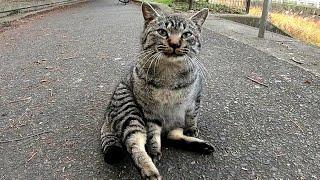 公園で出会った野良猫をモフモフしてきた