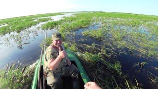 Рыбалка на ПАУК ПОДЪЁМНИК . Огромные караси и сазаны в пересыхающем ручье